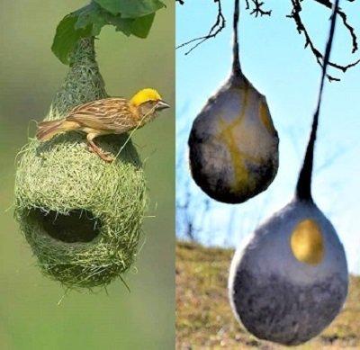 nidi per uccellini