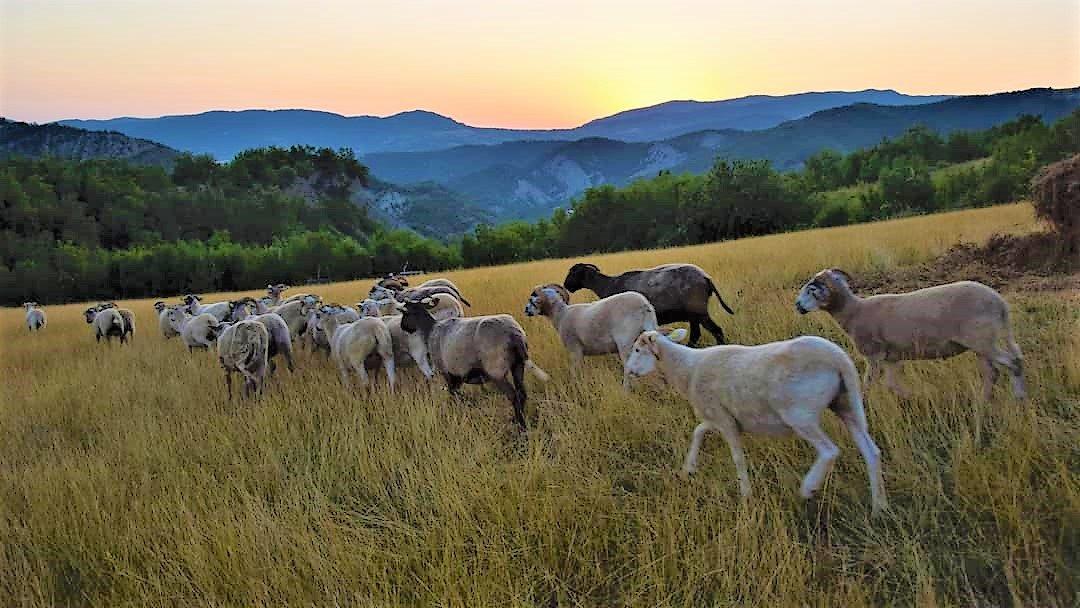 come acquistare online le creazioni in lana delle nostre pecore protette